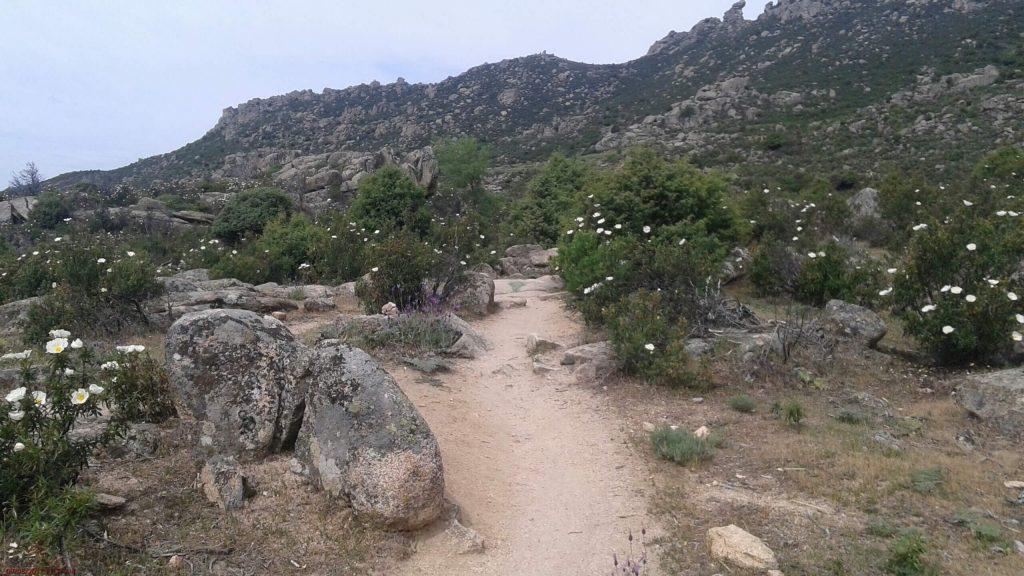 Madrid Camino Day 4 – Manzanares to Navacerrada